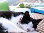 シグマ「DP1 Merrill」で撮る芦ノ湖の猫