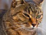 門前の小僧、ならぬ古いお寺の山門猫
