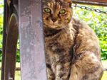 OM-Dで撮る公園の猫のベンチ事情