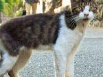 逃げる猫と寄ってくる猫、どっちも撮影は難しい!?