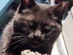 ミラーレス一眼で黒猫をカッコよく撮る!