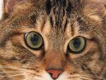 サクサク動いて猫撮りも快適! 富士フイルム「X10」