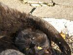 猫があふれる染井の小さな広場