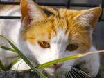 暗渠の上を歩いて出会う世田谷の猫たち