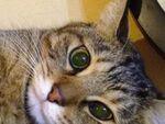 今年もゲット! 「iPhone 4S」で猫写真