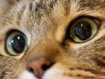 猫をどアップで撮るならマクロレンズで