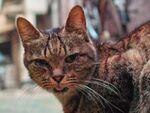 シャープさと発色のよさが魅力! シグマのデジカメで猫写真