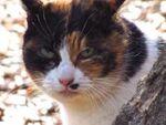 キヤノン 「PowerShot SX230HS」で撮った猫との1日