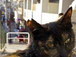 「夕やけだんだん」に集まる谷中の猫(前編)
