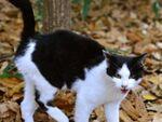 日没後の公園で「新参猫」もとい「パンダ猫」を撮る