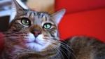 リコー「GXR」+「A12 28mm」で撮る冬の猫