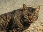 丸子川に神田川――川のほとりの猫