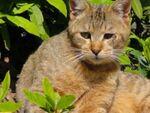 名古屋城の桜の木の下で出会った猫