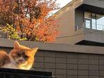 気がつくとそこにいる!? 都会に生きる猫たち