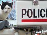 ひとだかりにも臆さない!? 江ノ島の猫