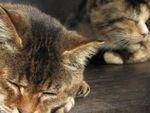 猫の秋はお昼寝の季節