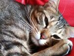 iPhone 3GSで猫を撮る!