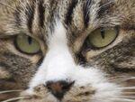 花見の途中で「猫だまり」を撮る
