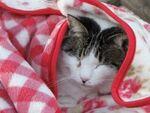 ぬくぬくな冬の猫