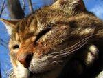 20倍ズーム「PowerShot SX1 IS」で猫撮り散歩