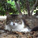 デブ猫、モップ猫 夏冬ビフォーアフター