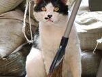 猫を求めて下町散策 根津~上野