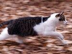 走るネコを「流し撮り」――腰を回して奴を追うのだ!
