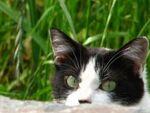 「頭かくして耳かくさず」 隠れんぼ猫を撮ろう