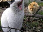 「ふにゃぁ~」と猫も生あくび──多摩川下流の猫たち