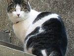 トコトコトコ~、登って降りてネコは階段が好き