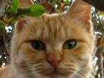 公園で見つけたフワフワ子猫