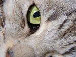 ぷよぷよの肉球をパシャリ! マクロ機能でネコを撮る