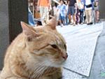 望遠・広角で変わる、ネコのいる風景