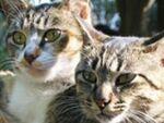シンクロナイズド・キャッツ――猫の群像