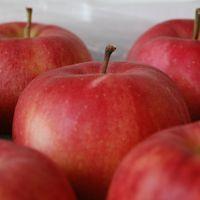 りんごリポート