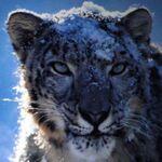 Snow Leopardも出没! WWDC 2009基調講演【前編】