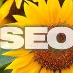 ユーザー目線のSEO対策「ヒマワリ思考法」