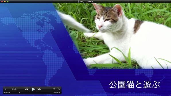動画 猫 が 遊ぶ