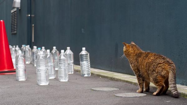 ASCII.jp:大量の猫よけペットボトル vs 地域猫 (1/2)