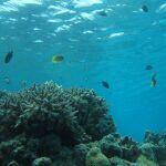 海をより青く撮りたい! 防水カメラのモード選択に注目する