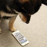 iPhoneで撮った写真をリサイズする「バッチリサイズ」を徹底解説