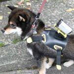 ペット×デジタル、愛犬にアクションカムを装着すると何が見える?