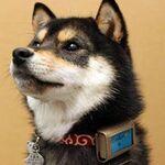 プルプル回数も! 愛犬の行動と環境をチェックして健康を管理するワザ