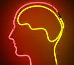 わたしたちの脳は、目にしたものをどのように認識しているのか