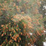 2015年徹底花粉対策! 花粉症を和らげる最新アイテム