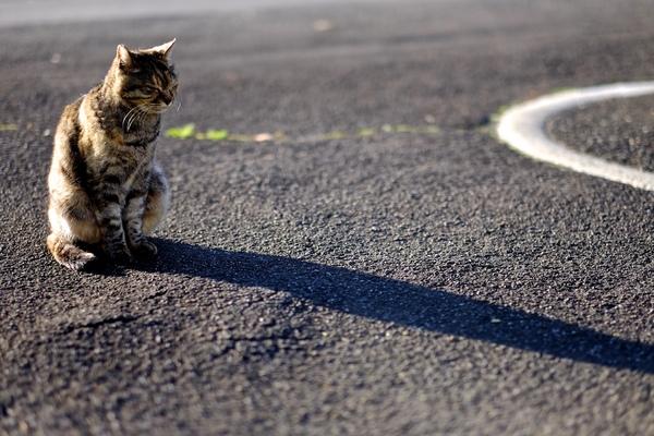が 背中 向ける 猫 を