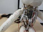 実際触れる! 実用化が楽しみなぬいぐるみ型ロボット「ソフトロボティクス」最先端