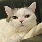 ネット民はネコ好き?「にゃんたーねっと」の真実