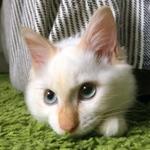 ネコとIoTの愛しい関係を考える「にゃんたーねっと」始まるニャ