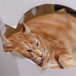 看板猫は10kg超! 秋葉原の老舗猫カフェ「ねこ・JaLaLa」